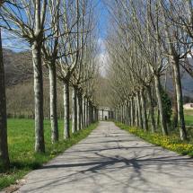 Avinguda de platans